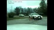 Кучета разкъсват полицейска кола