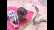 Dete Igrae S Kralska Kobra