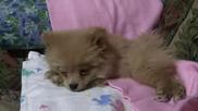 Най-сладкото заспиване:)