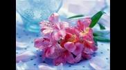 Честитa Първа Пролет