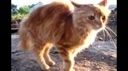 Много ядосано коте