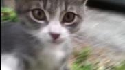Малко , сладко , палаво котенце !