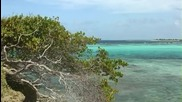 Остров Windward ,мартиника