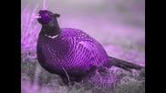 Einmusik - Pheasant