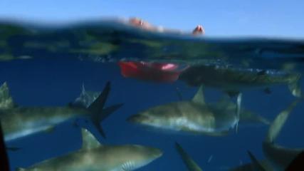 Това е най - прекрасната седмица на годината ( Седмицата на Акулите)