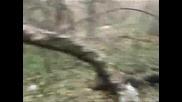 Лов На Диво Прасе В Етрополе (3част)