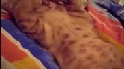 Мързеливо коте не иска да яде!