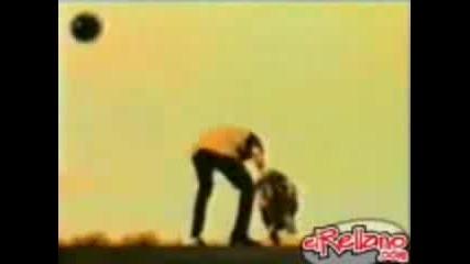 Реклама на Brahma :) - Crazy Turtle