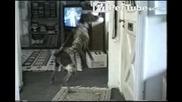 Куче родено за пощалион...