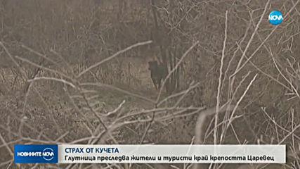 Агресивни кучета нападат хора във Велико Търново