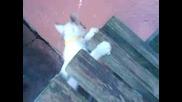 Коте неможе да се качи ;d