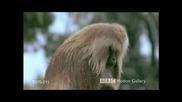 Дивата Африка - Bbc Motion Gallery