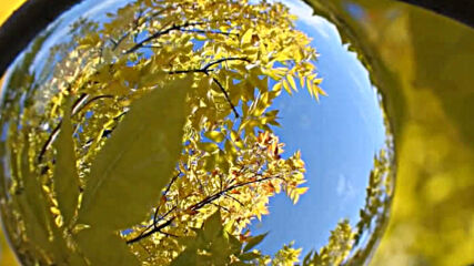 """""""Моята новина"""": Златна есен, събрана в сферата!"""
