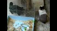 Котка напада заек познайте какво се случва