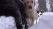 Austria: Avalanche rescue dogs put to the test in Tauplitzalm