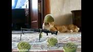 Кот ушел красиво 5 Cat gone Thriller Cat 5 - Афанасий