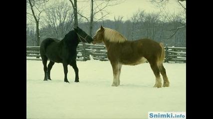 Красиви коне и кончета