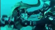 Рисковете На Подводното Снимане Видео