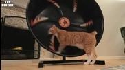 Котка тренира ..