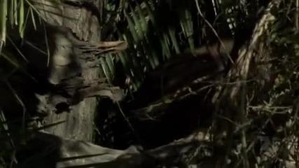 Леопард спасява бебе бабуин от хиена