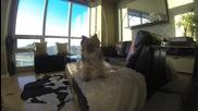 Неопитно куче се опитва да хване топче.. Забавен кадър
