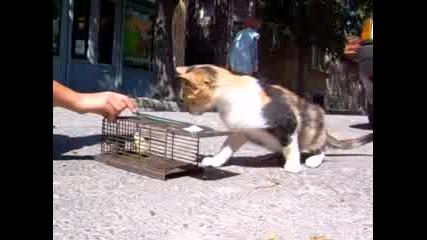 Котка Хваща Мишка