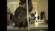 и котка до сега , обича вода !!!!