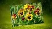 Пролетни усмивки под дъжда! ... ...