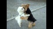 Танцуващи кученца