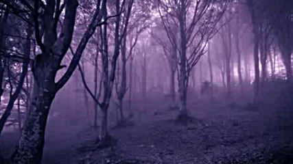 Spooky Halloween Music Shadow Wolf Woods Magical Enchanting Dark