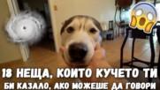 18 неща, които кучето ти би казало, ако можеше да говори