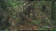 Nigeria: World's rarest gorillas caught on camera in forest