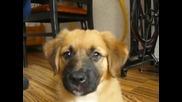 Моето кученце Мика