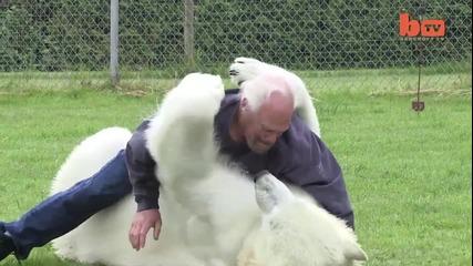 Човек и бяла мечка - Приятели