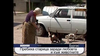 Пребиха старица защото хранела котки