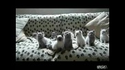 Сладки Котенца - В Ритъма На Музиката