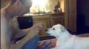Dog 's Reaction To Disappearing Magic Trick