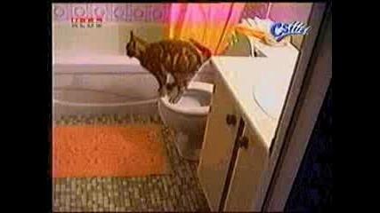 Котка - Тоалетна