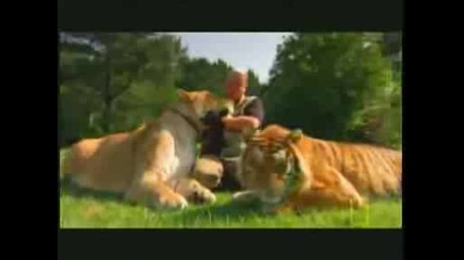 Liontiger and Liger Compared