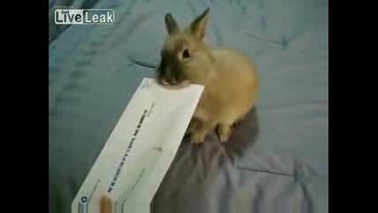 Зайчок отваря писмо