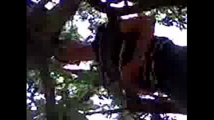 Maimuni V Zgradovoto