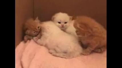 Бебета Котета