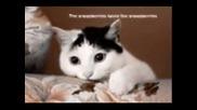 Funny Cats - Hey Baby