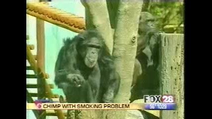 пушеща маймуна