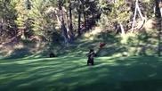 Палаво мече се забавлява на зелена полянка голф игрище