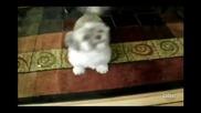 Най-чудното лаене на куче - Смях