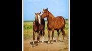 Орхан Мурад - Седем бели коня 2014video