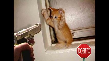 Най - смешните котки на планетата! 100% смях