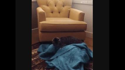 Коте изненадва куче, смях!