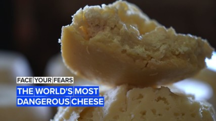 Face Your Fears: The maggot cheese for the bravest foodies